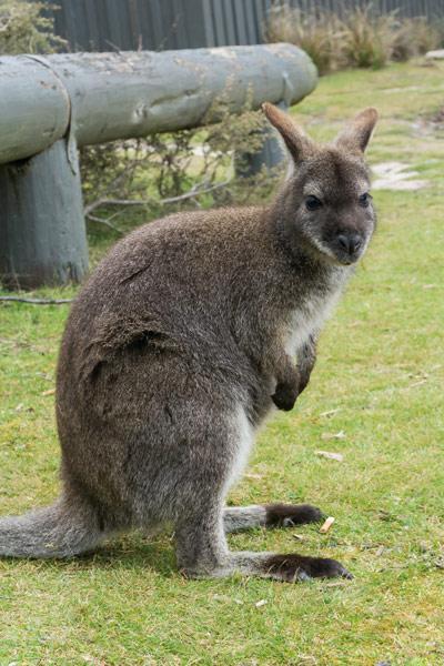 tasmania-100