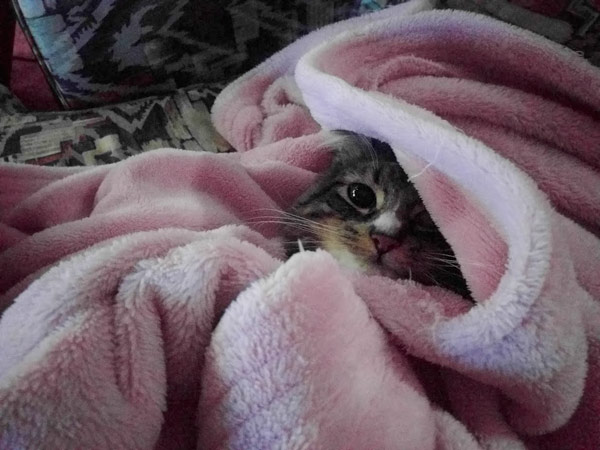 champy-wrapped-in-blanket